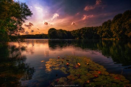 Seerose im See